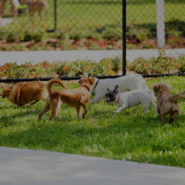 Large Dog Park at Marion Square Apartments